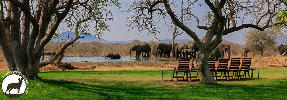Bush-House-Elephants